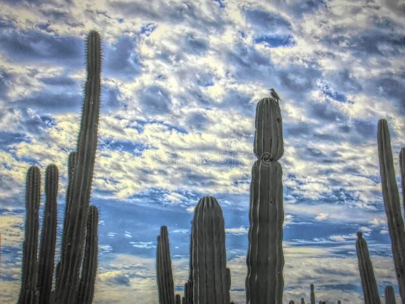 Gila Woodpecker Perches Above escavou o ninho fotografia de stock royalty free