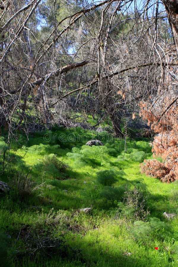 Download Gilboa forest, Israel stock image. Image of environment - 87293319