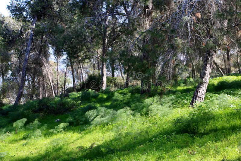 Download Gilboa forest, Israel stock photo. Image of gilboa, summer - 87295252