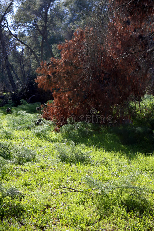 Download Gilboa forest, Israel stock photo. Image of spring, environment - 87295270
