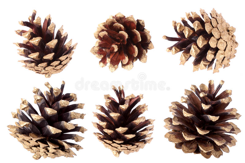 Gilded pine cone - Christmas decoration stock images