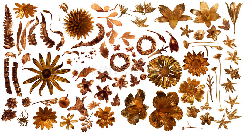 Gilded Real Flora Parts. Golden flora collection of 85 gilded, real flower parts, studio photographed with partially liquid gold , on white, comes with clipping royalty free stock images
