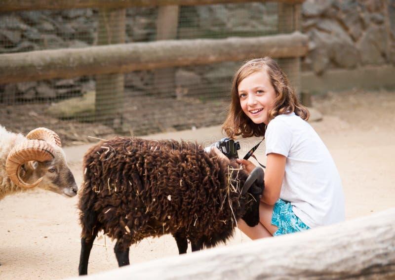 Gilg satisfizo con el animal doméstico de la cabra fotos de archivo