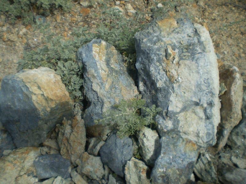 Gilgat royalty-vrije stock foto's