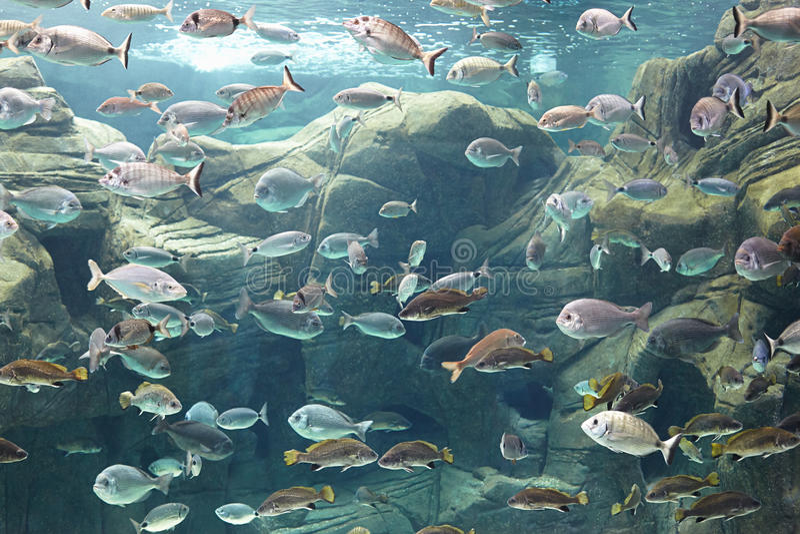 gili印度尼西亚海岛在海龟水下的世界附近的lombok meno 免版税库存图片