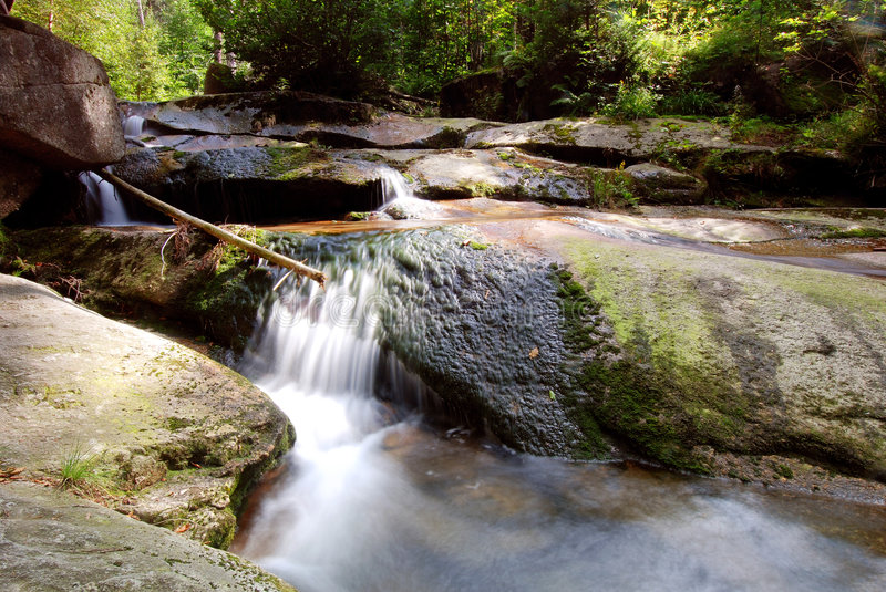 Download Gill stock image. Image of rapidity, nature, colorfull - 3006059