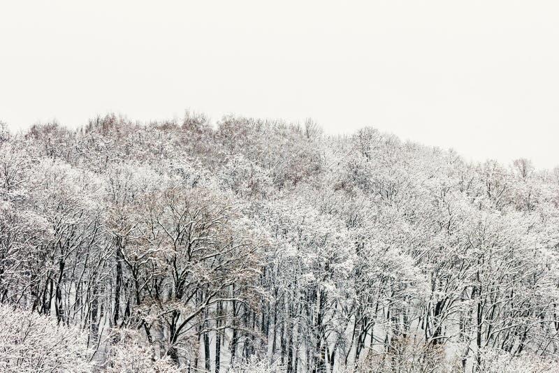 Gillar dolda träd för snö saga arkivbilder