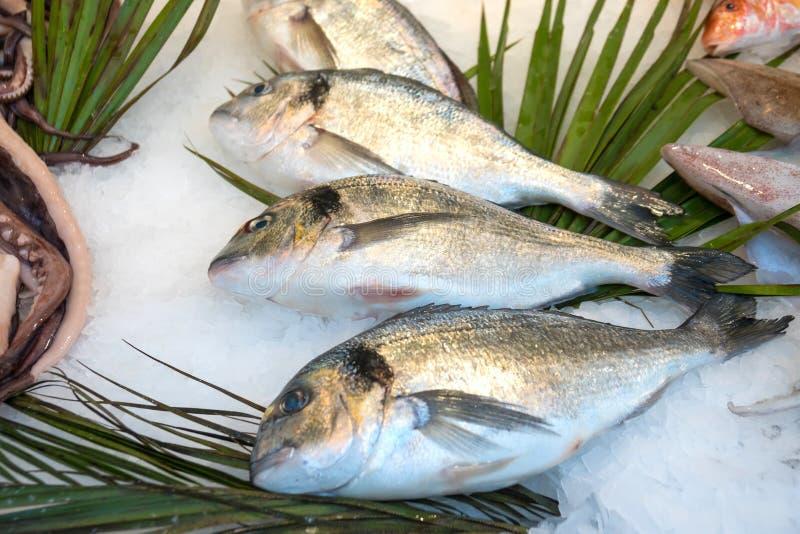 Gilt-head bream fish Dorado on ice at a market.  stock photo
