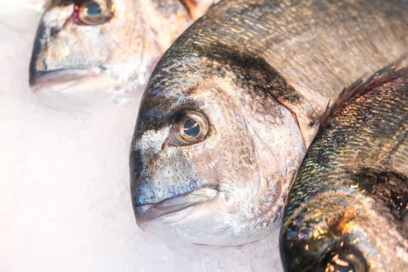 Gilt-head bream fish Dorado on ice at a market.  royalty free stock photography