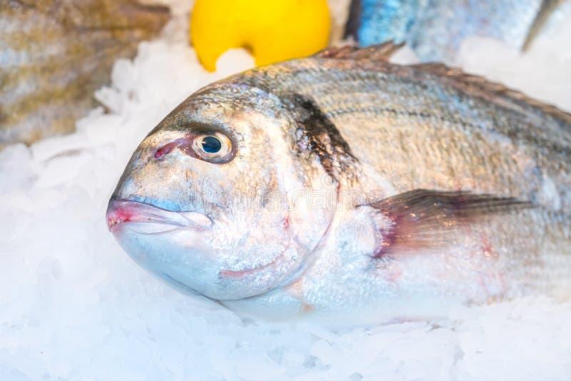 Gilt-head bream fish Dorado on ice at a market.  royalty free stock photo