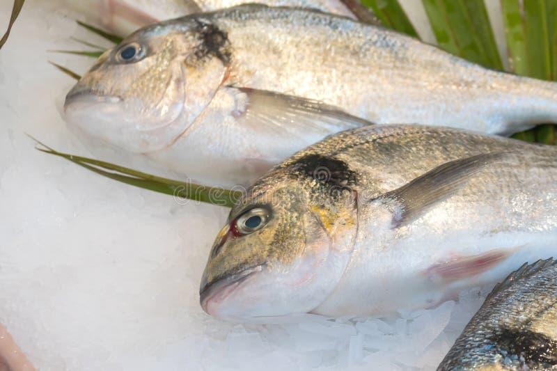 Gilt-head bream fish Dorado on ice at a market.  stock image