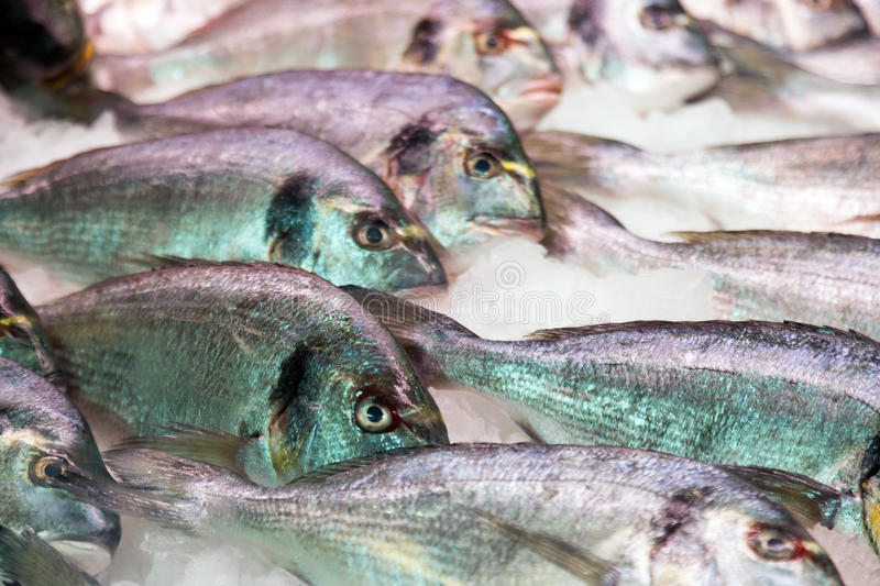 Gilt-head bream fish on mediterranean market counter royalty free stock photography
