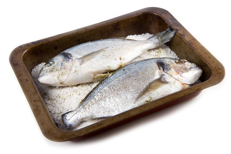 Gilt head sea bream. Baked in sea salt royalty free stock photo