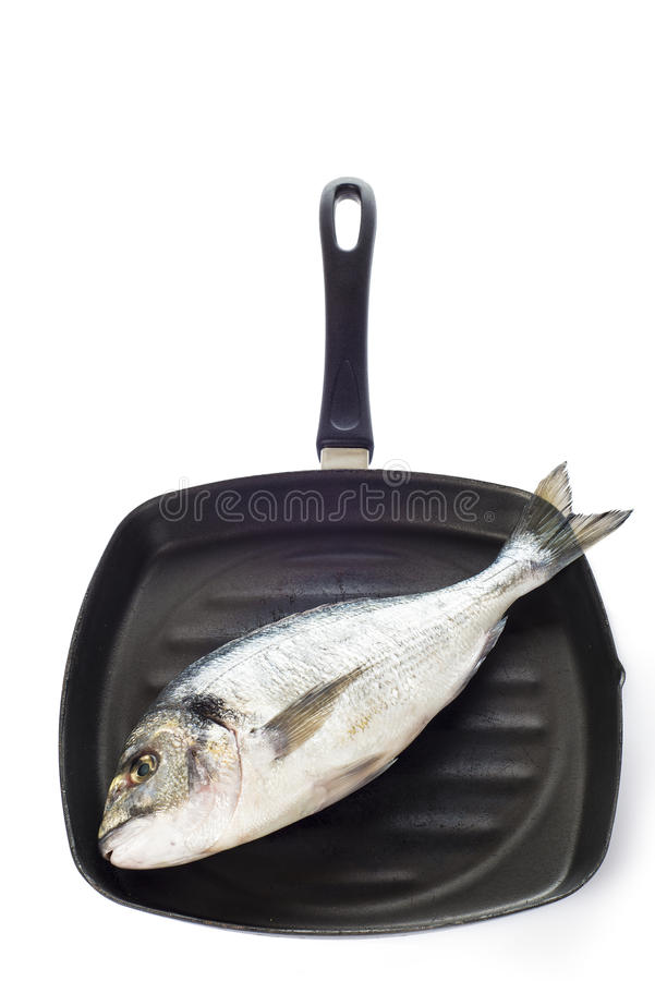 Gilt-head sea bream fish on a pan isolated. Raw gilt-head sea bream fish on a pan isolated on a white background stock photography