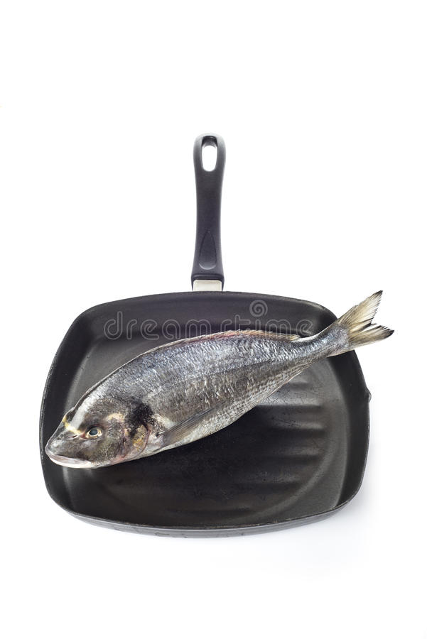 Gilt-head sea bream fish on a pan isolated. Raw gilt-head sea bream fish on a pan isolated on a white background royalty free stock photos
