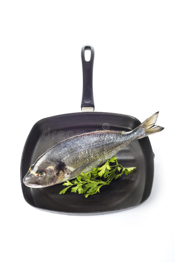 Gilt-head sea bream fish on a pan isolated. Raw gilt-head sea bream fish on a pan isolated on a white background stock images