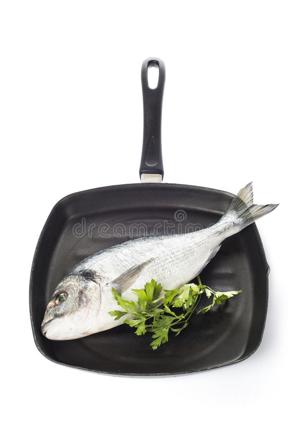 Gilt-head sea bream fish on a pan isolated. Raw gilt-head sea bream fish on a pan isolated on a white background stock image