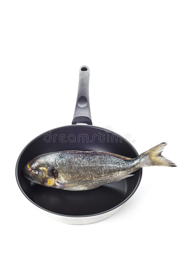 Gilt-head sea bream fish on a pan isolated. Raw gilt-head sea bream fish on a pan isolated on a white background royalty free stock photo