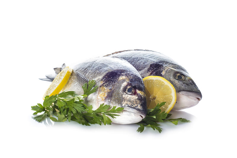 Gilt-head sea bream fishes isolated. Raw gilt-head sea bream fishes garnished with parsley and lemon slices isolated on a white background royalty free stock photo