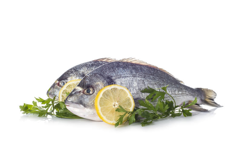 Gilt-head sea bream fishes isolated. Raw gilt-head sea bream fishes garnished with parsley and lemon slices isolated on a white background stock image