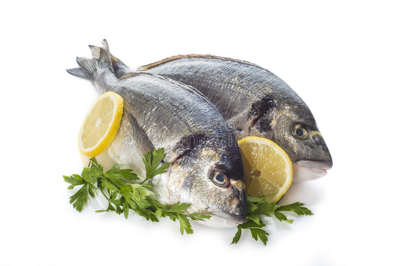 Gilt-head sea bream fishes isolated. Raw gilt-head sea bream fishes garnished with parsley and lemon slices isolated on a white background royalty free stock images