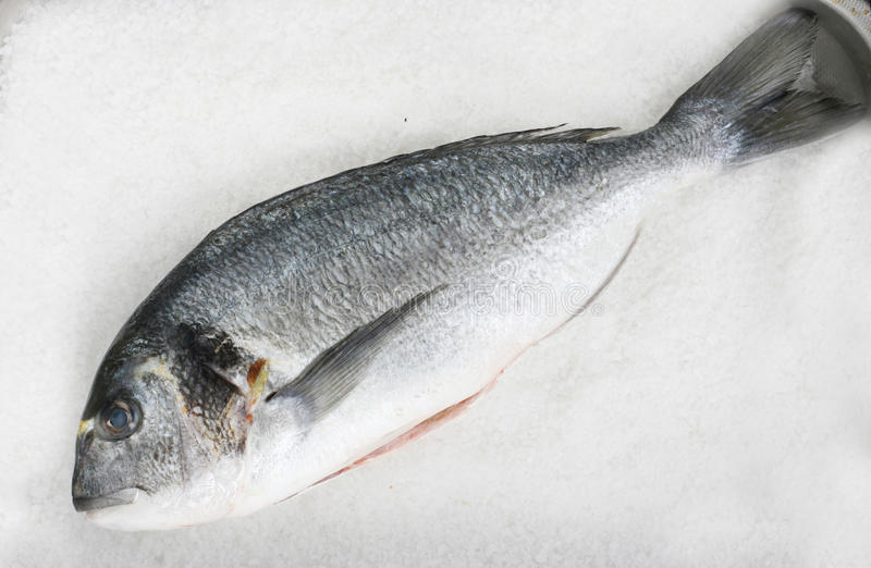 Gilt head (sea) bream (Sparus aurata). Ready to be baked in coarse salt royalty free stock photo