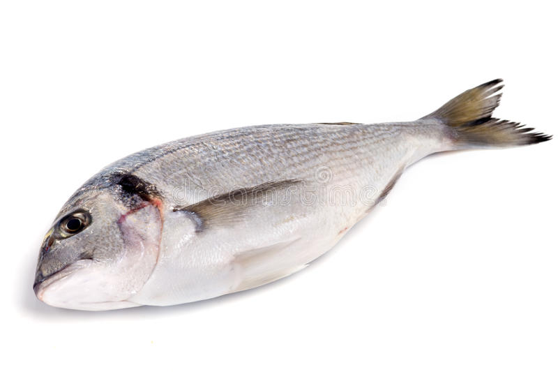 Download Gilthead stock image. Image of nutrition, selling, unfreezing - 12279519