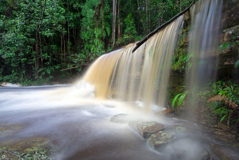 Giluk vattenfall i den Maliau handfatet royaltyfri foto