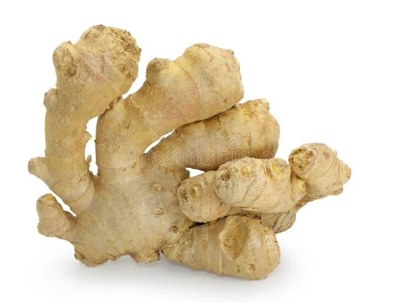 ginger zdjęcia stock