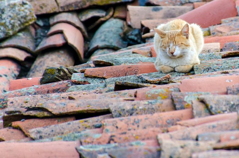 Alley cat sleeping on the roof. Ginger alley cat with closed eyes sleeping on the roof stock images