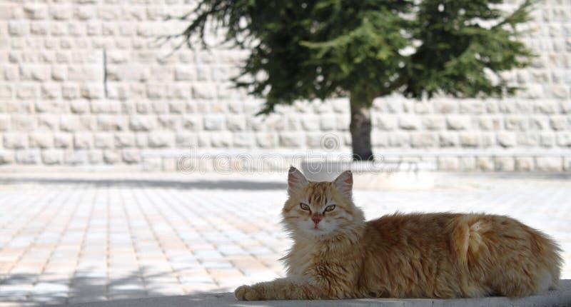 Download Ginger Cat stockbild. Bild von draußen, horizontal, sommer - 47100837