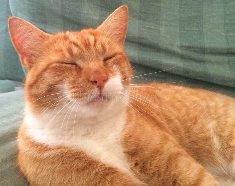 Ginger Cat fotos de stock