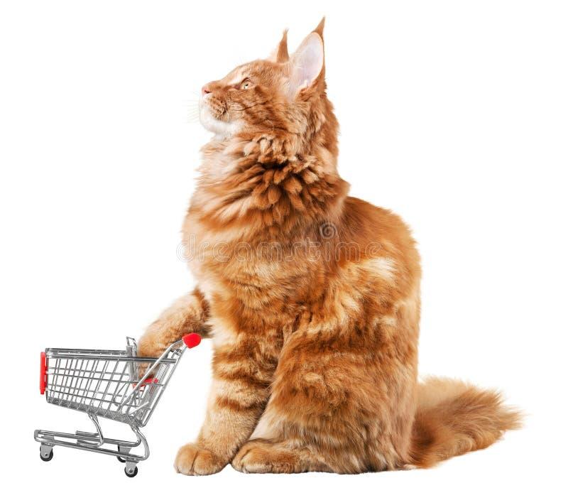 Ginger Cat com um carrinho de compras diminuto imagem de stock royalty free