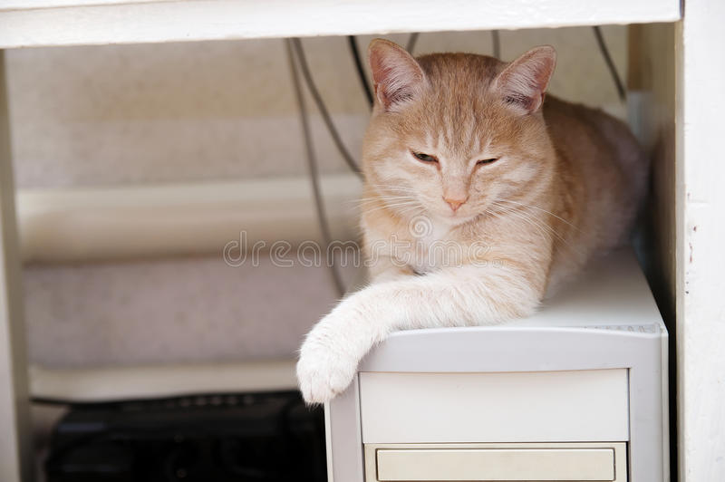 Ginger cat on computer under table warming. Ginger cat lying on pc computer under table warming himself royalty free stock photos