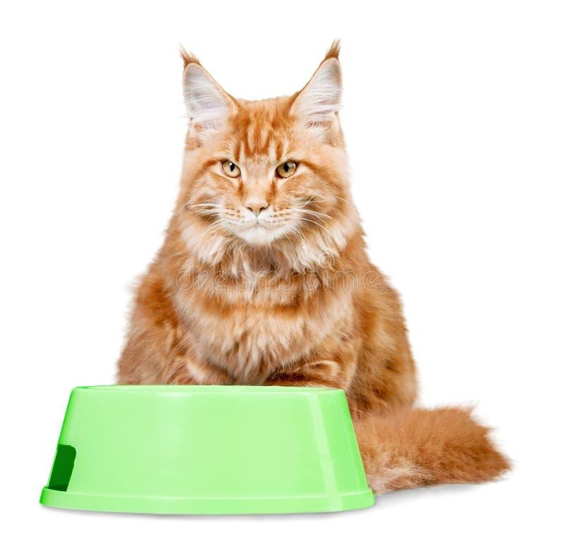 Download Ginger Cat Con Una Ciotola Dell'alimento Isolata Fotografia Stock - Immagine di nazionale, dishware: 117975048