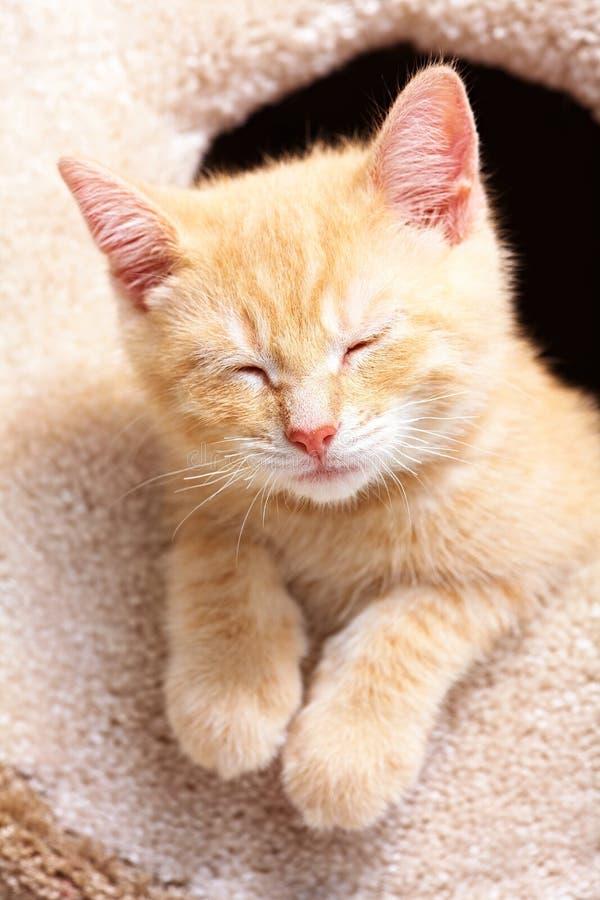 Ginger Cat de sono imagens de stock royalty free