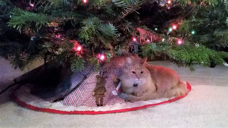 Ginger Cat debajo del árbol de navidad fotos de archivo libres de regalías