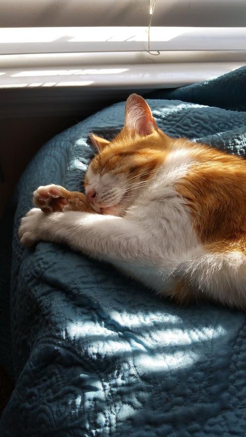 Ginger Cat durmiente imagenes de archivo