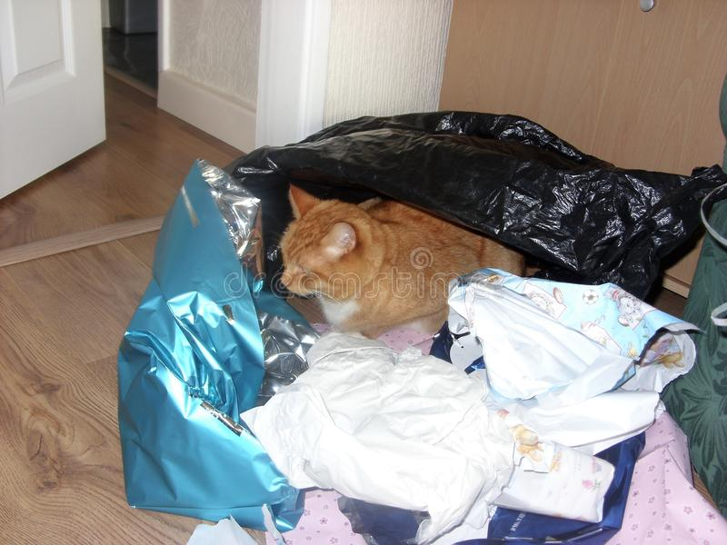 Ginger Cat Hides Amongst Gift-Wrapping fotos de stock