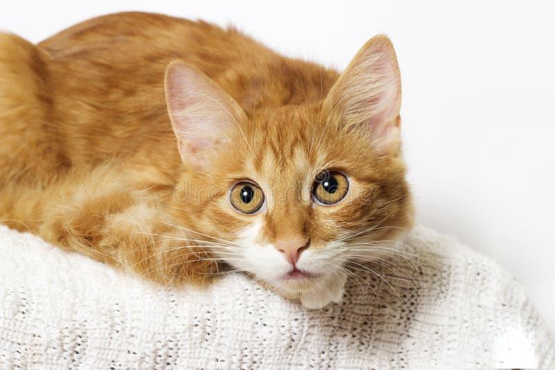 Ginger Cat Looking royalty-vrije stock foto