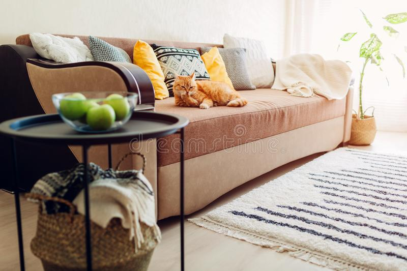 Ginger cat lying on couch in living room and cleaning paws stock photography