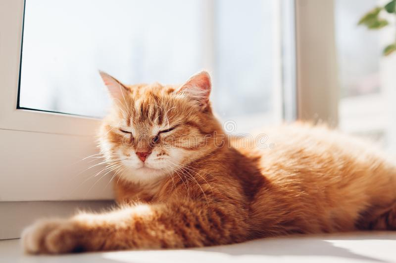 Ginger cat lying on window sill at home in the morning. Pet enjoying sun. Ginger cat lying on empty bed at home in the morning. Pet enjoying sun. Kitten sleeping stock photography