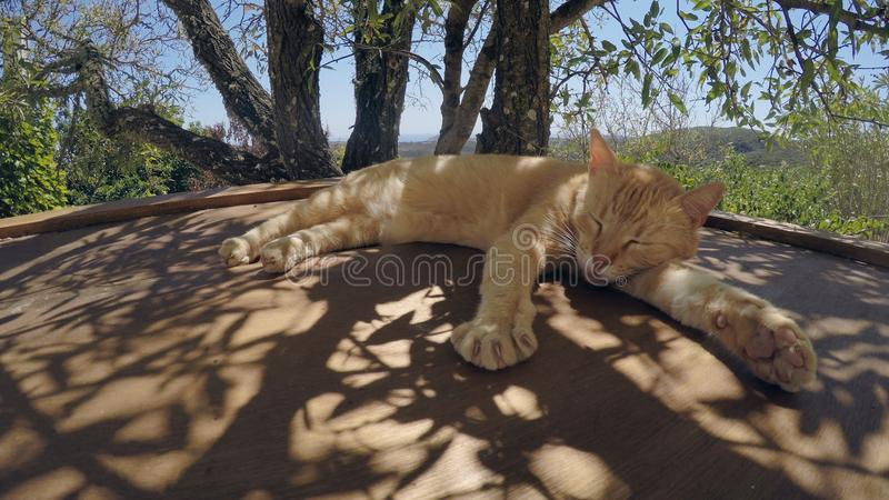 Ginger Cat Napping In The Shade royaltyfria bilder