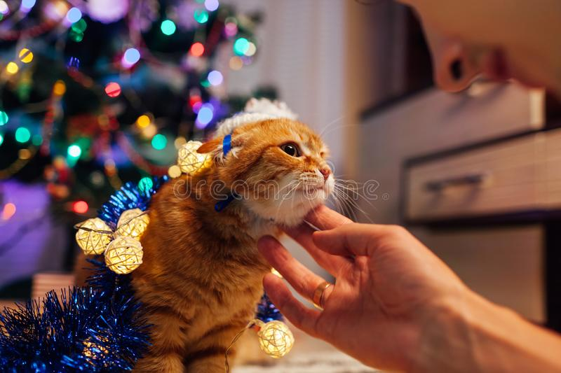 Ginger cat playing under Christmas tree with lights and tinsel. Christmas and New year concept. Man talking to pet stock photo