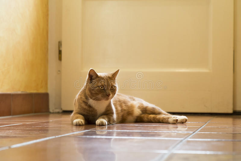 Ginger Cat relaxing at home. Ginger cat in comfortable position on floor at home royalty free stock photo