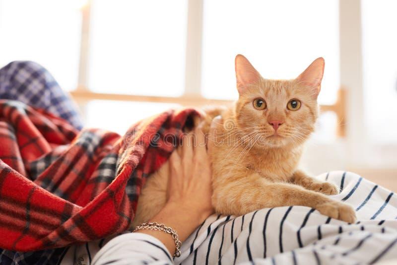 Ginger Cat Relaxing met Eigenaar royalty-vrije stock afbeelding