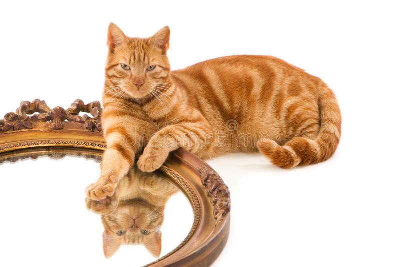Ginger cat's reflection in old mirror. Horizontal image with a white background stock photo