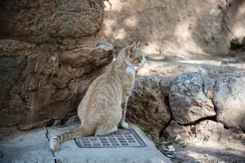 Ginger cat sitting at curb of street in spanish village. Ginger cat sitting at the curb of a street in small spanish village stock image