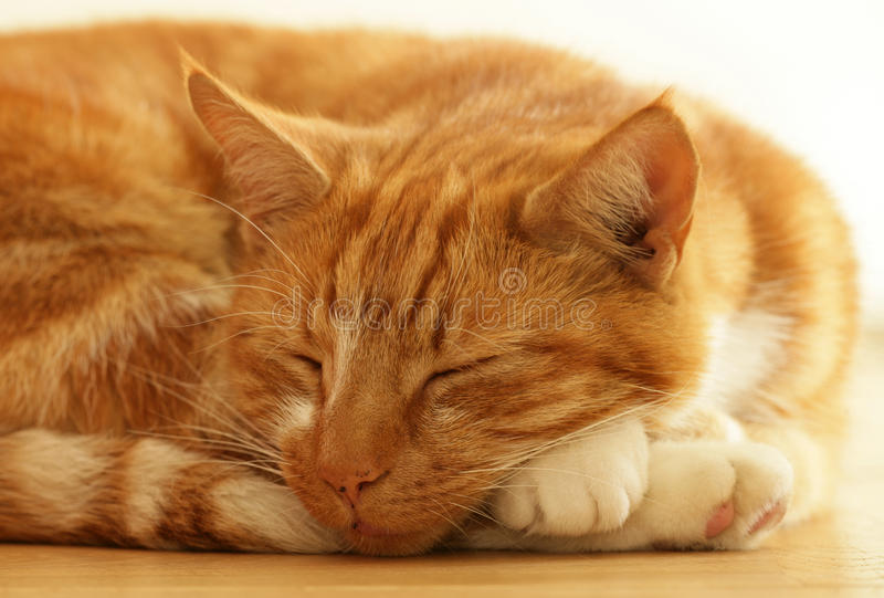 Ginger cat sleeping royalty free stock images