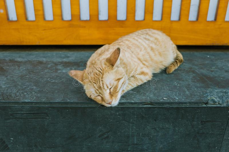 An orange cat sleeping at a shop corner royalty free stock photo